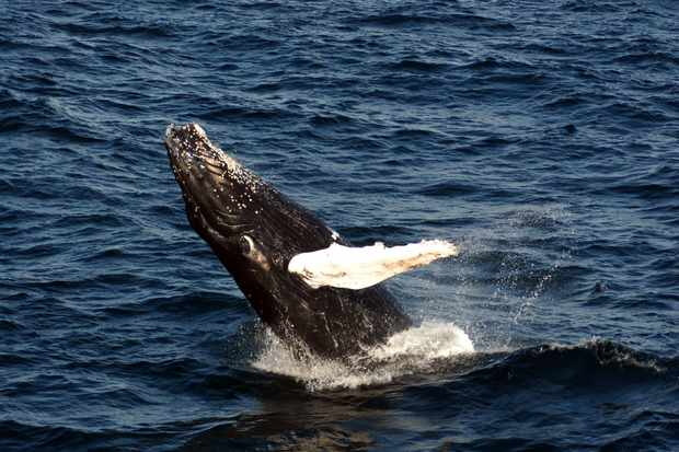 Scotland ranked top in annual whale and dolphin survey