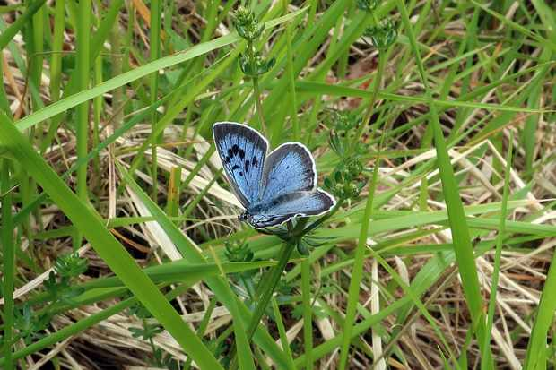 Gloucestershire sees the return of Britain's rarest butterfly