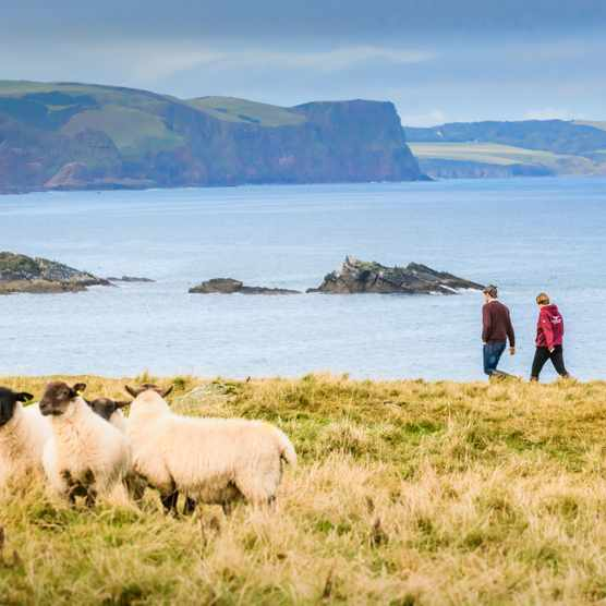 Views from Auldmill bay across to Pennan Head and Troup Head/Down on the Farm