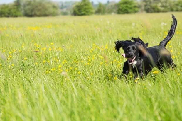 Win a dog-friendly break in Warwickshire