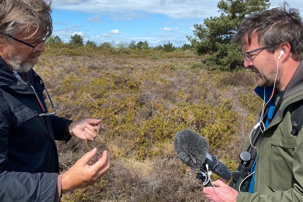 A morning on the Dorset heaths in search of Britain's rarest reptile