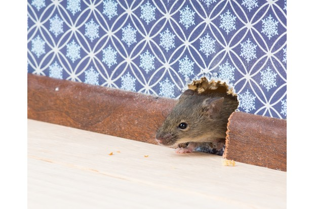 Mouse entering house through hole in the wall