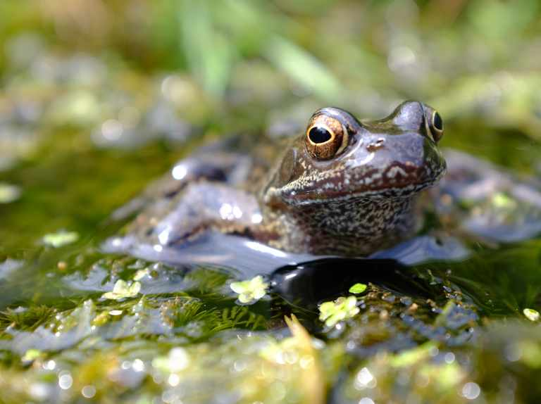 Image result for march ponds aquatic life