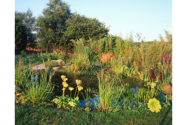 A lovely garden pond surrounded by lush vegetation