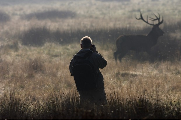 Photographer shooting a red deer stag