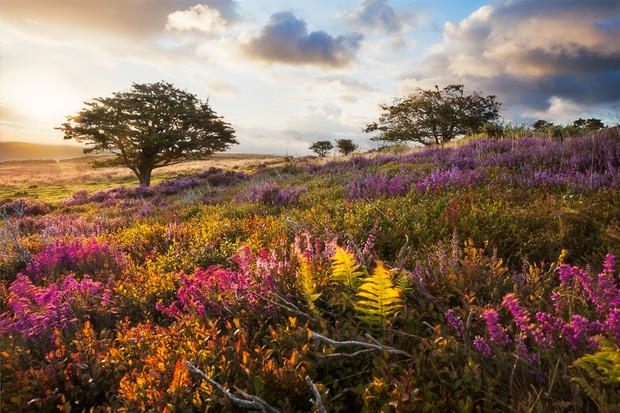 A meadow in Exmoor, England at sunrise.