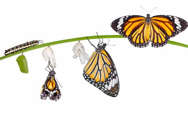 How Does A Caterpillar Turn Into A Butterfly  Discover Wildlife Caterpillar Turning Into A Butterfly Process Caterpillar Life Cycle   Mathisa Sgetty I Need Help Writing A Book also The Yellow Wallpaper Character Analysis Essay  Narrative Essay Topics For High School Students