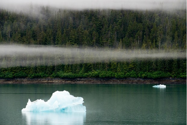 Iceberg floating in front of misty woodland in Tongass National Forest