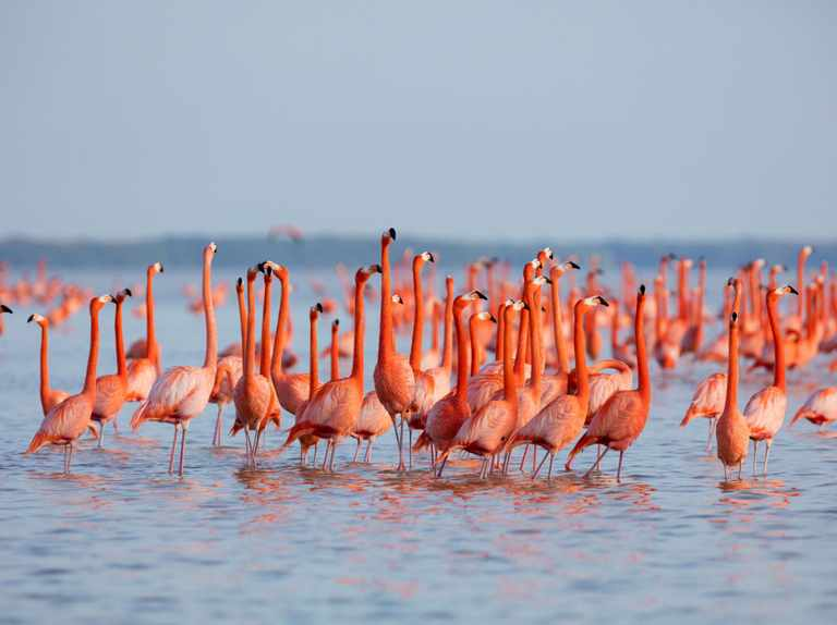 Flamingo Guide How To Identify Each Species And Where To See Discover Wildlife