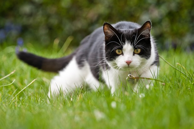 6 key behaviours that reveal the wild ancestry of your cat - Discover  Wildlife