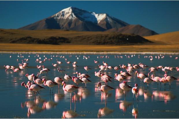 Flamingoes at high altitude in Atacama desert, Bolivia.