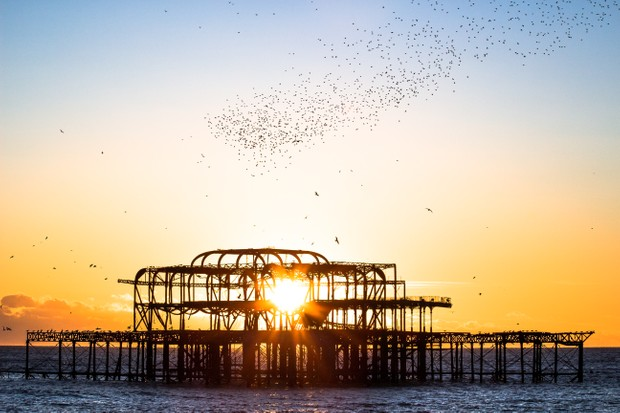 Starlings coming in to roost at West Pier in Brighton © Luke Forster / Getty