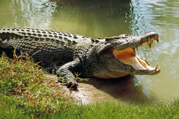 Andaman and Nicobar Island - The Lohabarrack Salt Water Crocodile Sanctuary