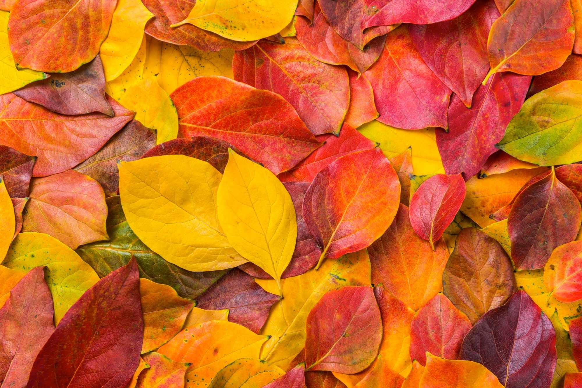 Autumn leaves © Kenan Olgun / Getty