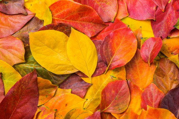 Five Autumn Leaves And Berries To Spot Discover Wildlife