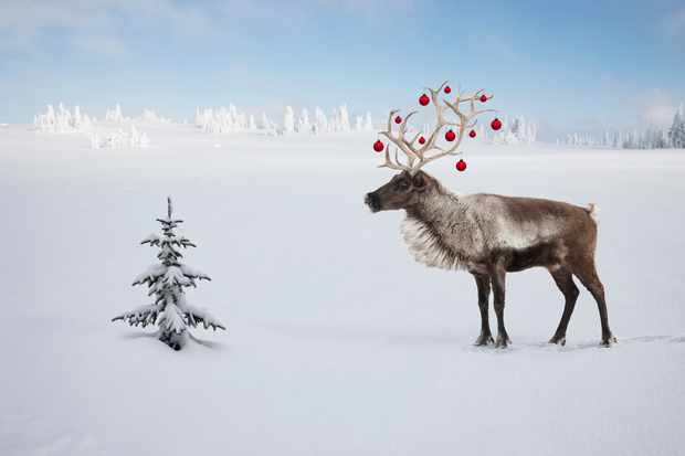 A Christmas reindeer with baubles in its antlers looking at a small Christmas tree in the snowy Arctic tundra