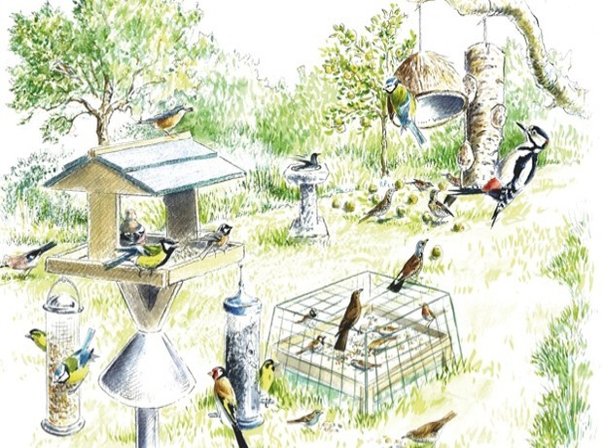 Garden-birds-artwork_Dan-Cole_The-Art-Agency_623-ec385b2