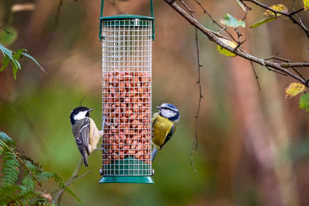 How to attract birds to your garden - Discover Wildlife