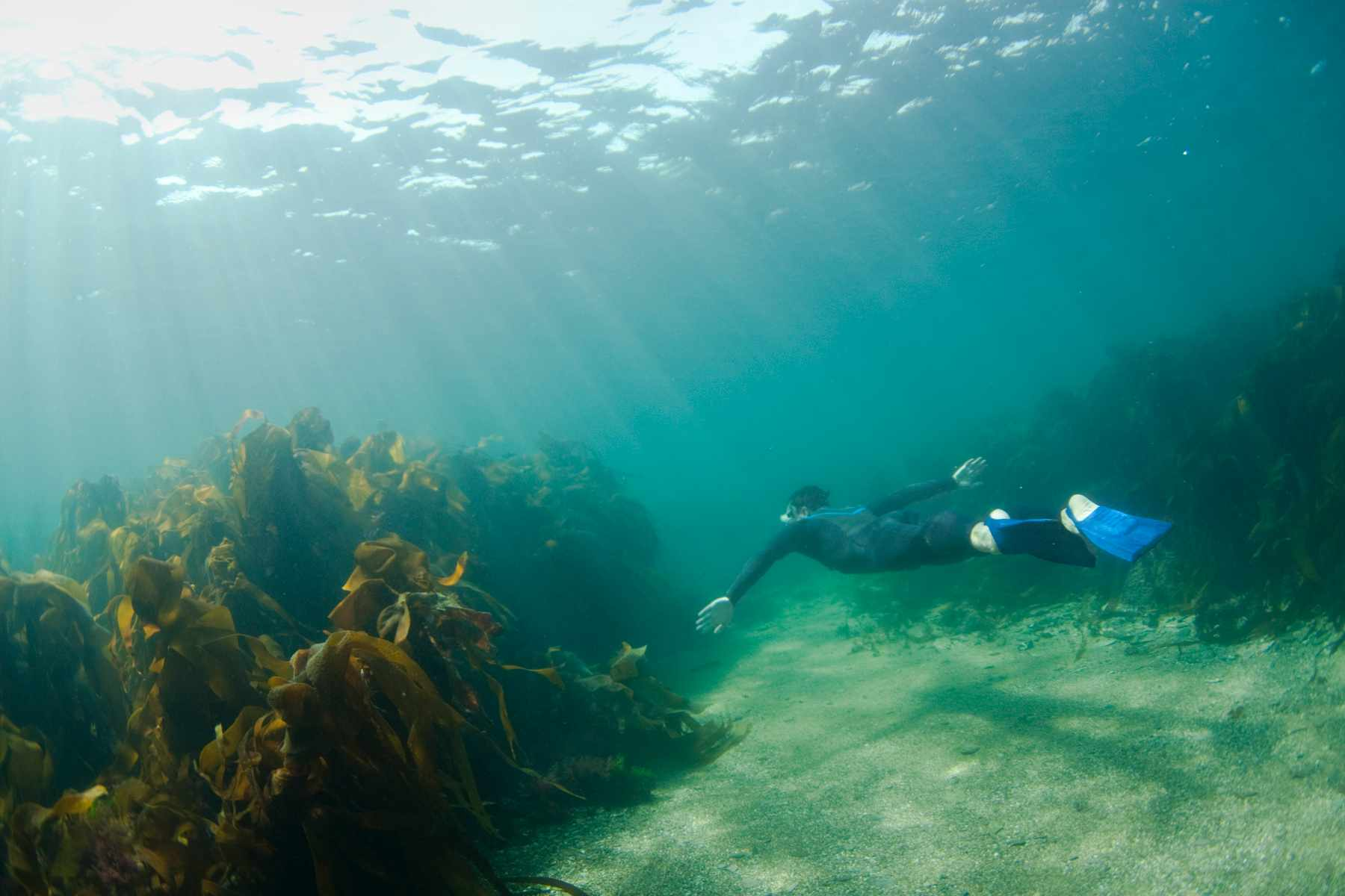 Snorkelling off the coast of Cornwall in the UK. © Matt Stansfield/Getty