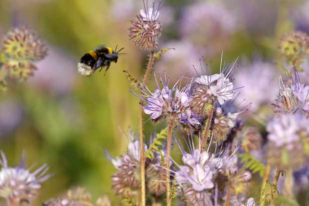 How to identify spring bees - Discover Wildlife