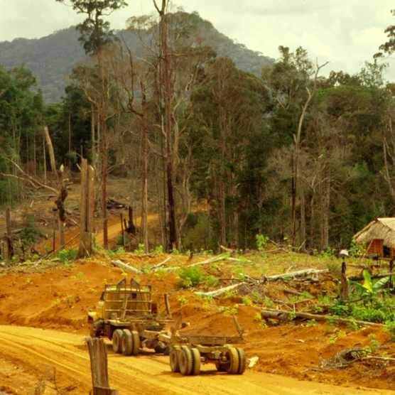A logging road in Borneo