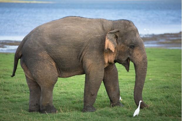 21 Amazing Elephant Facts  African Elephant Facts -1651