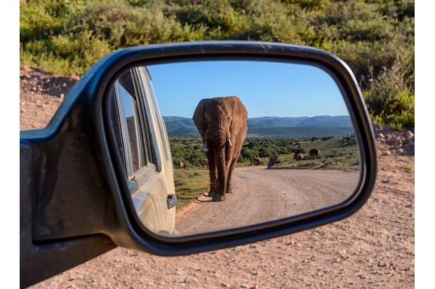 An Elephant walking down a road in Southern Africa reflected in a car mirror