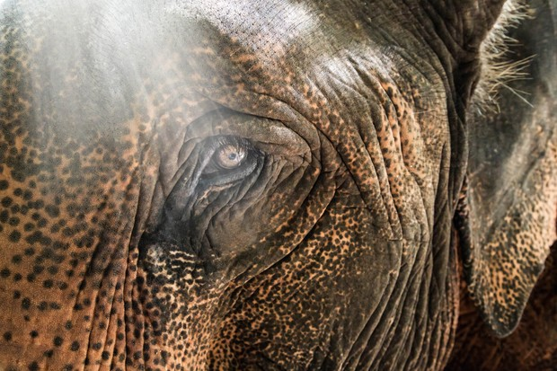 Close up of an elephant's eye and skin