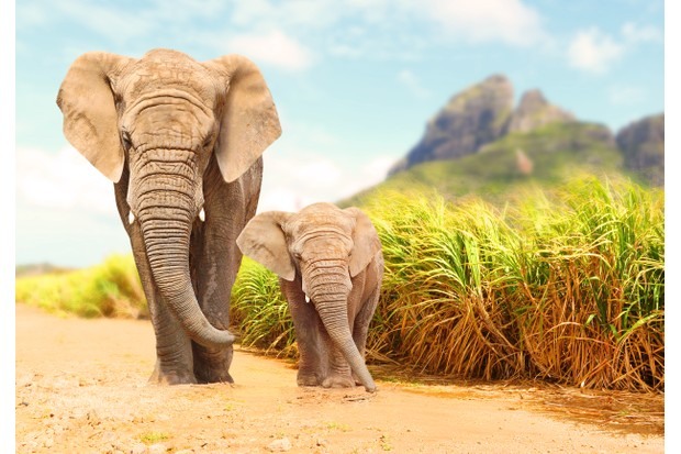 21 amazing elephant facts | African elephant facts - Discover Wildlife