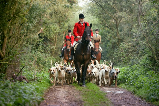 A traditional fox hunt with a pack of dogs
