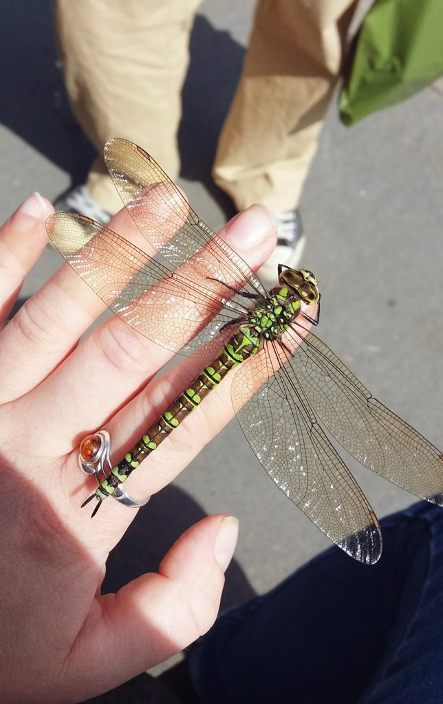Dragonfly resting on hand © Megan Shersby