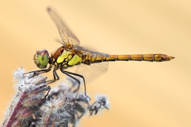 Side view of a beautiful dragonfly resting on a plant