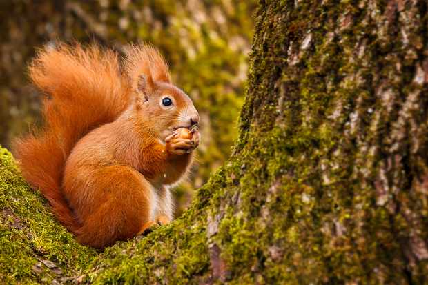How Do Squirrels Find Their Nuts Discover Wildlife