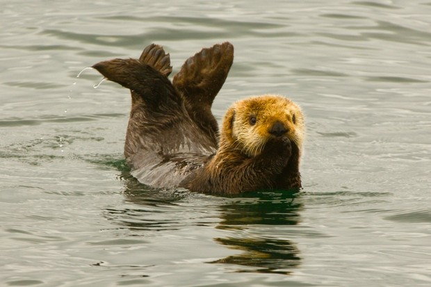 13 Amazing Otter Facts Sea Otter Facts Fun Facts About Otters Discover Wildlife