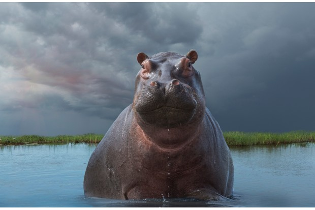 7 amazing facts about hippos - Discover Wildlife