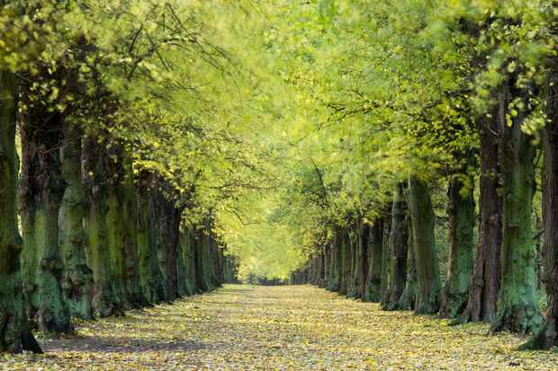 An avenue of elm trees in Hampshire. © Travelpix Ltd/Getty