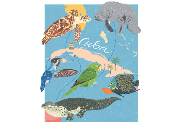 Cuba wildlife illustration. © Dawn Cooper