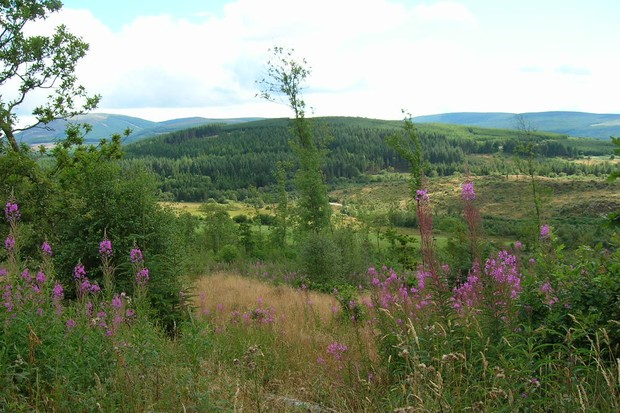 Mabie Forest. © Butterfly Conservation