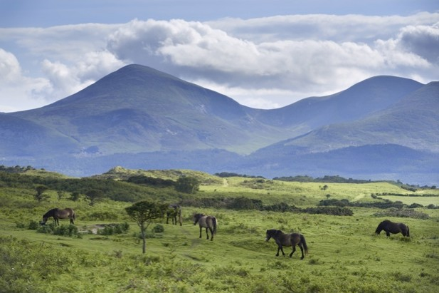 Murlough National Nature Reserve. © National Trust