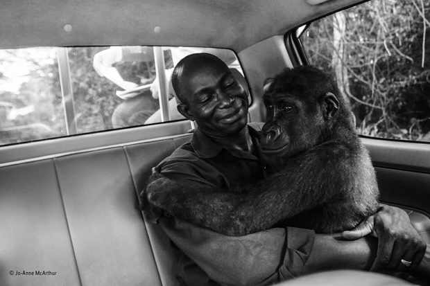 Pikin and Appolinaire. © Jo-Anne McArthur/Wildlife Photographer of the Year