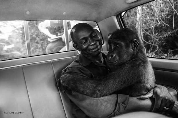 Pikin and Appolinaire.© Jo-Anne McArthur/Wildlife Photographer of the Year
