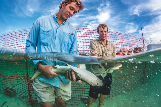 Bouyoucos and Raguse release two tagged pups back into the wild © Shane Gross