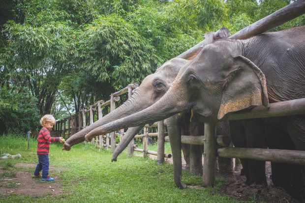 Elephant Valley tries to keep human interaction to a minimum but some hand feeding is allowed. © Abi Campbell