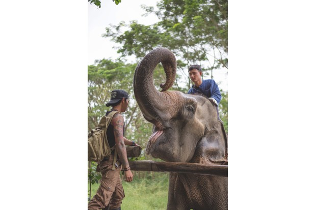 Vets check the health of a resident. They are the only people allowed to sit on the sanctuary's elephants. © Abi Campbell