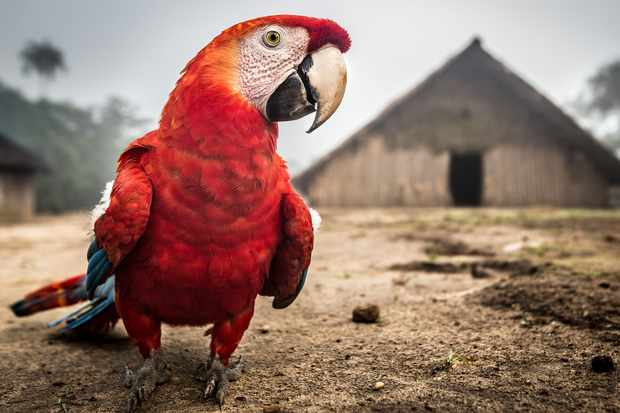 The Amazon is home to a wide range of species. © Cesar David Martinez/Avaaz