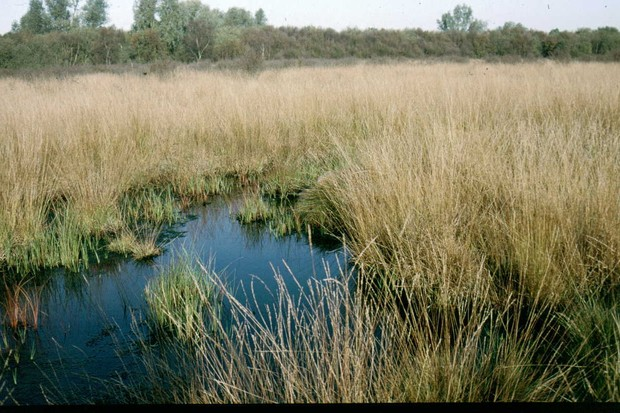 Holcroft Moss Nature Reserve, where the spider was found © Cheshire Wildlife Trust