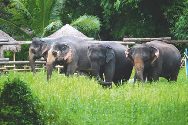 Elephant Valley is home to six elephants, four of which can be seen here, but hopes to expand. © Elephant Valley