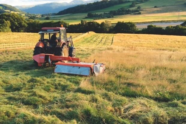 1-First-Hay-Cut-August-2015_623-65ec6ca