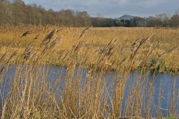 Ham Wall RSPB reserve, Somerset Levels, showing area of open water and reed, Glastonbury Tor can be seen in the background