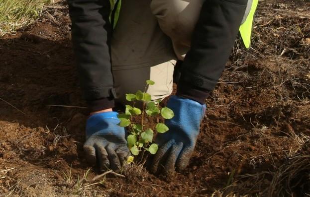 Volunteer plants a tree at Dundreggan Conservation Estate, Loch Ness. ©Trees for Life